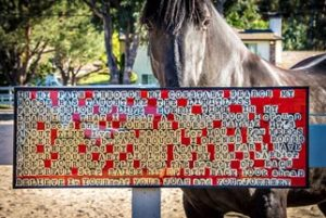 Word art and horse
