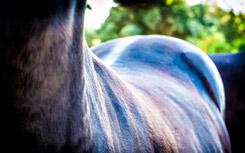 Horses back