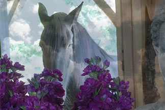 Black horse with flowers