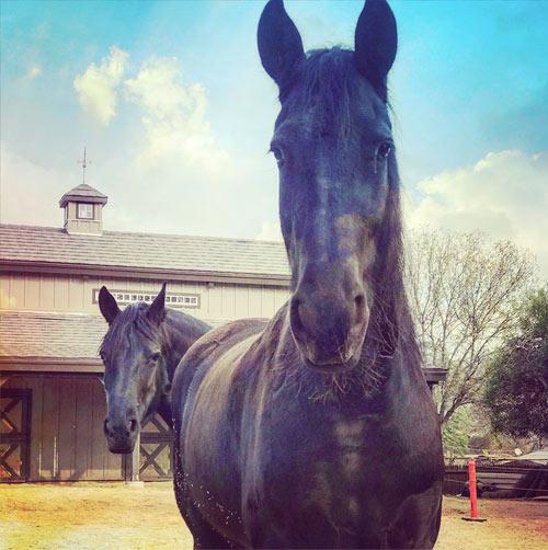 2 Beautiful Horses